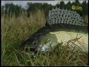 Секреты рыболова от братьев Щербакових