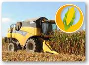 закуповуємо кукурудзу в Рівненській області