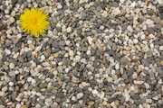 Продам камень натуральный