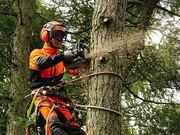 Спилювання, валка, кронування, видалення, зрізання дерев. Арбористика